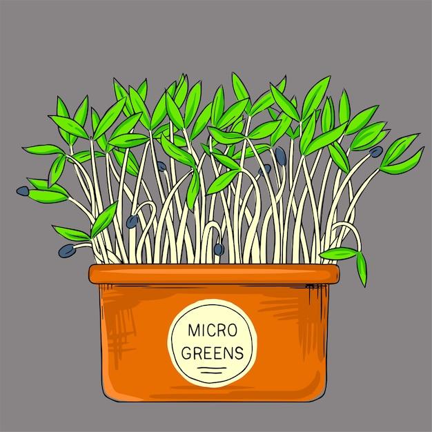 Microgreens Poussant Dans Un Pot. Une Alimentation Saine, Biologique Et Saine. Graines Pour La Culture Des Microgreens Vecteur Premium