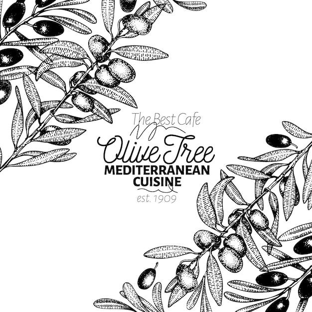 Modèle de bannière d'olivier. illustration rétro de vecteur Vecteur Premium