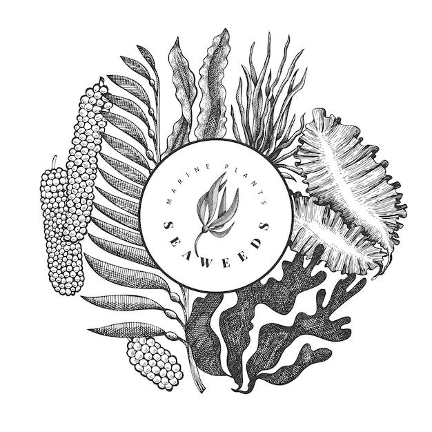 Modèle De Conception D'algues. Illustration D'algues Vectorielles Dessinés à La Main. Vecteur Premium