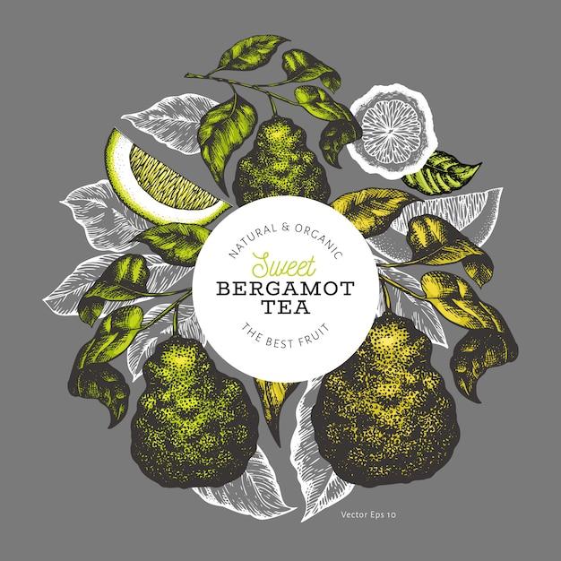 Modèle De Conception De Branche Bergamote. Vecteur Premium