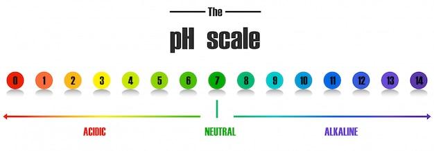 Modèle D'échelle De Ph Science Vecteur gratuit