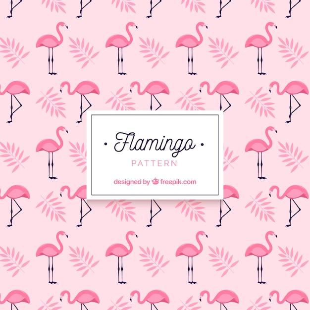 Modèle d'été flamenco Vecteur gratuit