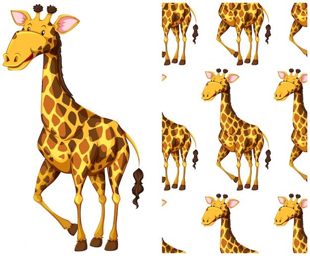 Modèle De Girafe Sans Soudure Isolé Sur Blanc Vecteur gratuit