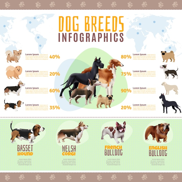 Modèle d'infographie de races de chiens Vecteur gratuit