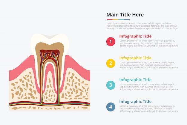 Modèle d'infographie de structure dentaire Vecteur Premium