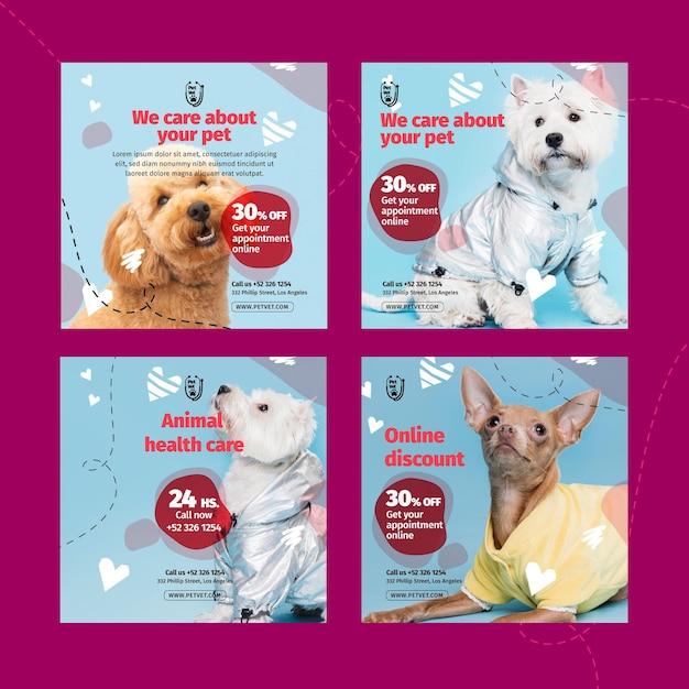 Modèle De Publication Instagram Vétérinaire Pour Animaux De Compagnie Vecteur Premium
