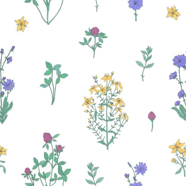 Modèle Sans Couture Botanique élégant Avec Des Herbes Fleuries Sur Fond Blanc. Vecteur Premium