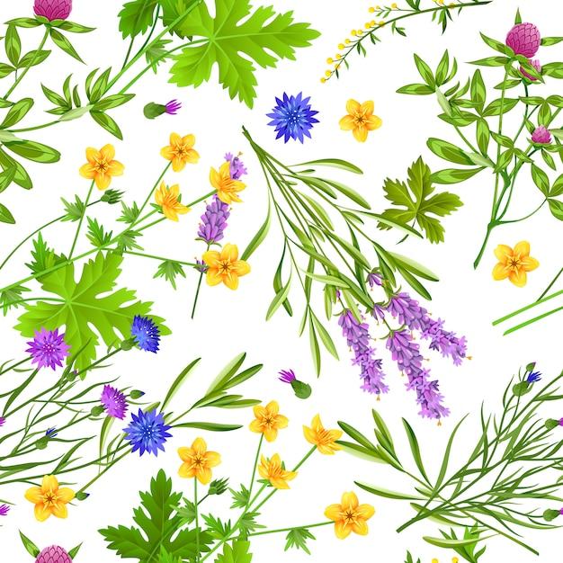 Modèle sans couture d'herbes et de fleurs sauvages Vecteur gratuit