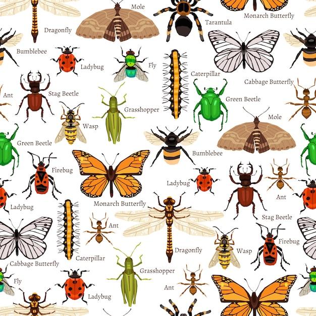 Modèle sans couture d'insectes Vecteur gratuit