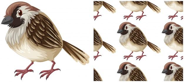 Modèle sans couture d'oiseau isolé sur blanc Vecteur gratuit