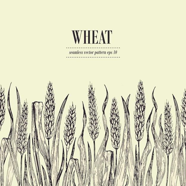 Modèle sans couture de vecteur de champ de blé. illustration dessinés à la main vintage. peut être utilisé pour l'emballage du pain, les étiquettes de bière Vecteur Premium