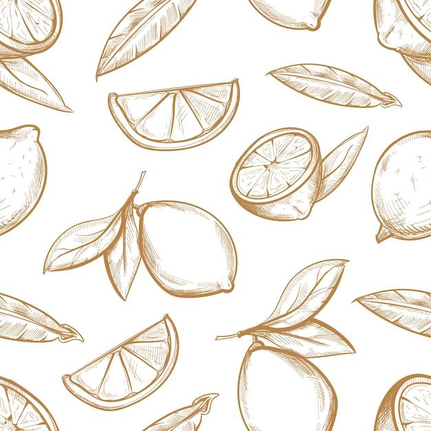 Modèle seamless vector avec citrons dessinés à la main avec la branche, la fleur de citron, les tranches d'agrumes et les feuilles. Vecteur Premium
