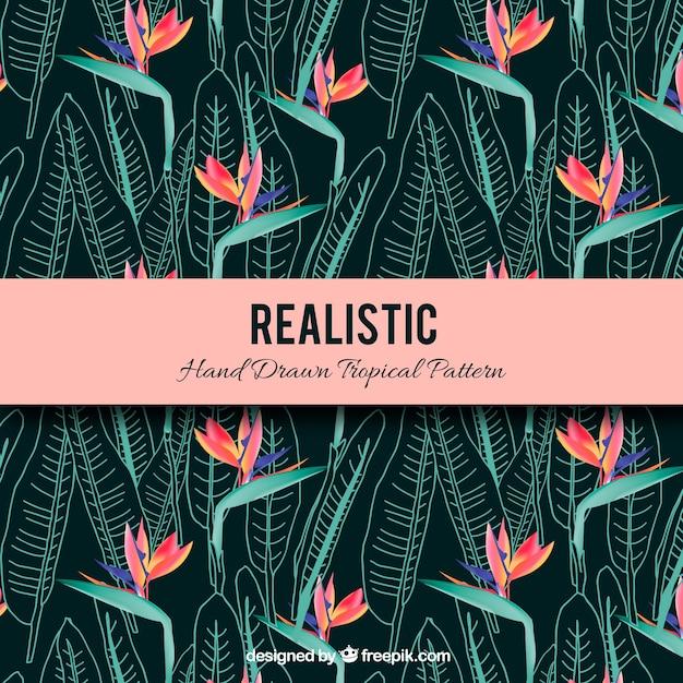 Modèle tropical réaliste dessiné à la main Vecteur gratuit