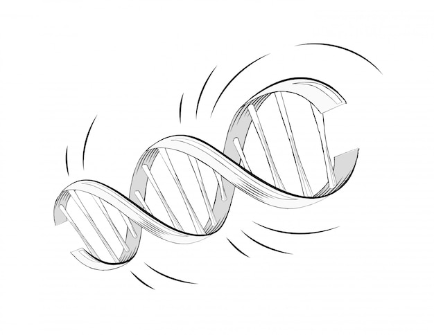 Molécule D'hélice D'adn Réaliste De Vecteur Avec Des Gènes Vecteur Premium