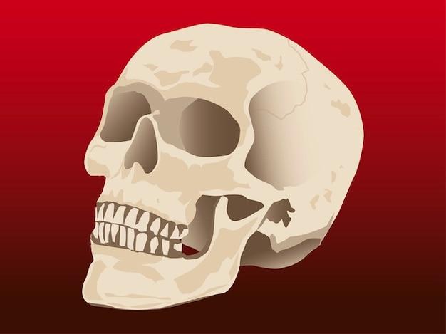 Morte crâne humain skelton vecteur Vecteur gratuit