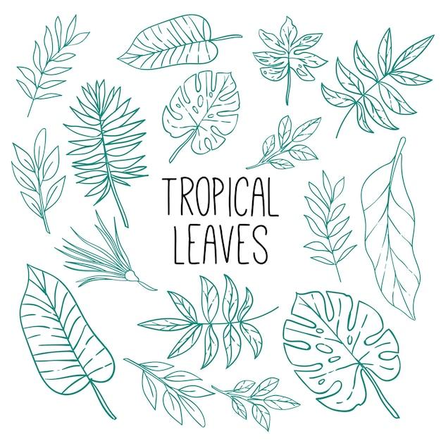 Motif de feuilles tropicales lineart Vecteur Premium