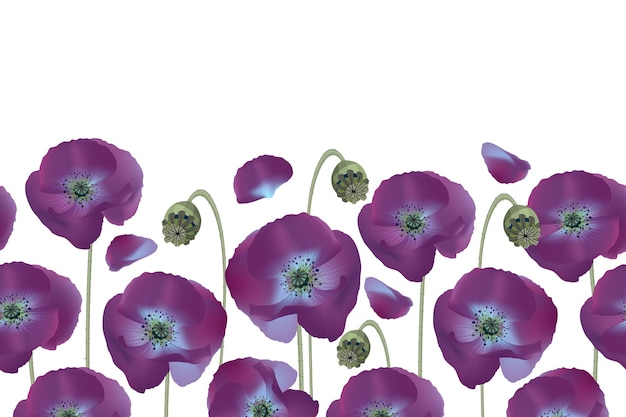 Motif Floral Sans Soudure, Frontière. Coquelicots Violets Isolés Sur Fond Blanc. Fleurs Douces. Vecteur Premium