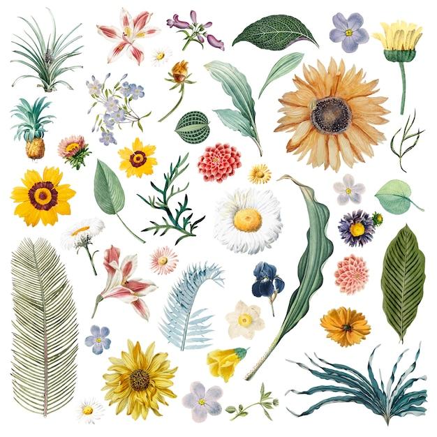 Motif de fond floral Vecteur gratuit