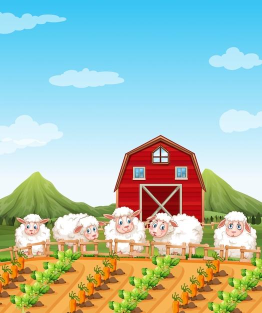 Mouton dans les terres agricoles Vecteur Premium