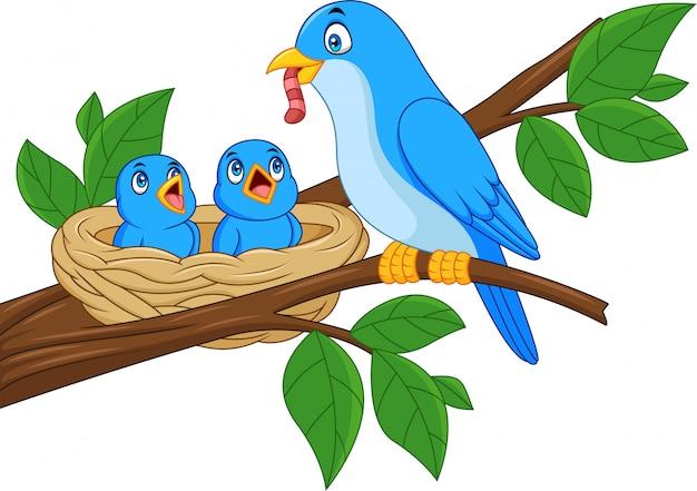 Oiseau bleu mère nourrit les bébés dans un nid Vecteur Premium
