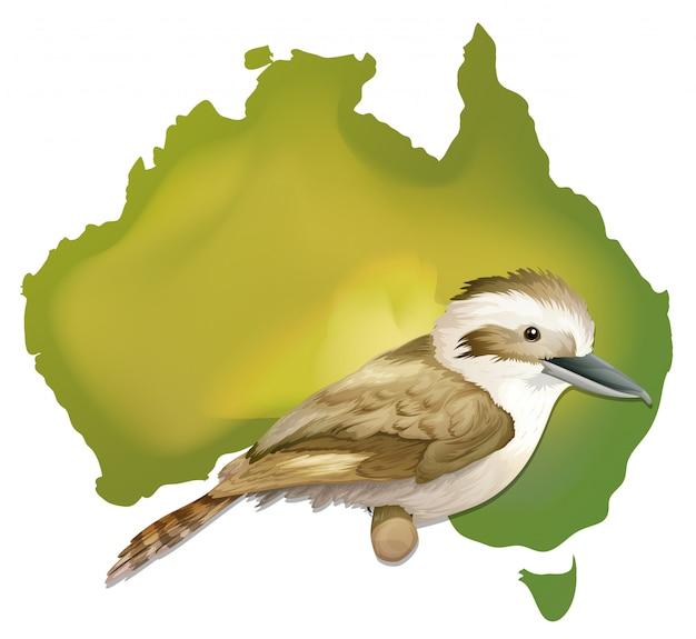 Oiseau sauvage en australie Vecteur Premium