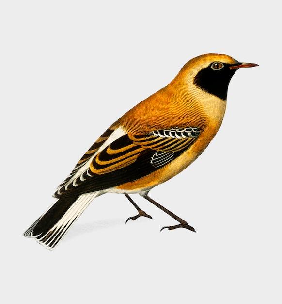 Oiseau Vecteur gratuit