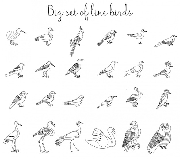 Les oiseaux décrivent des icônes d'illustration fine ligne. Vecteur Premium