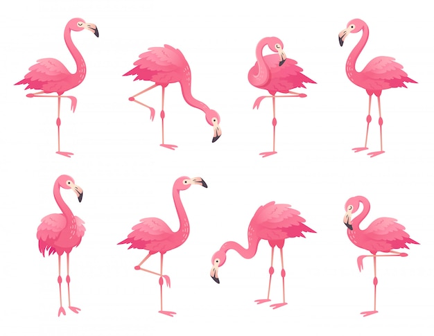 Oiseaux flamants roses exotiques. Vecteur Premium