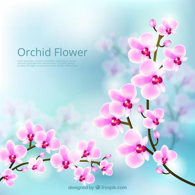 Orchidée fleur belle arrière-plan Vecteur gratuit