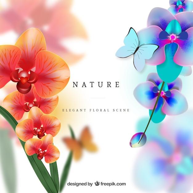 Orchidées colorées Vecteur gratuit