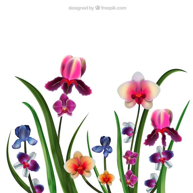 Orchidées Réalistes Vecteur Premium