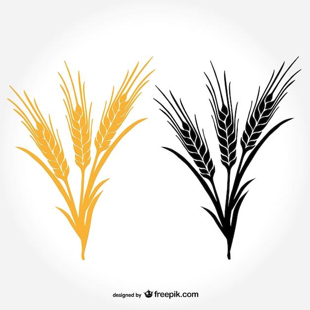 Oreilles de vecteur de blé Vecteur gratuit
