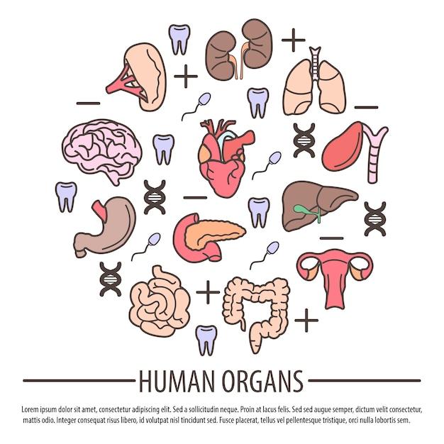 Organes humains avec des parties d'adn Vecteur Premium