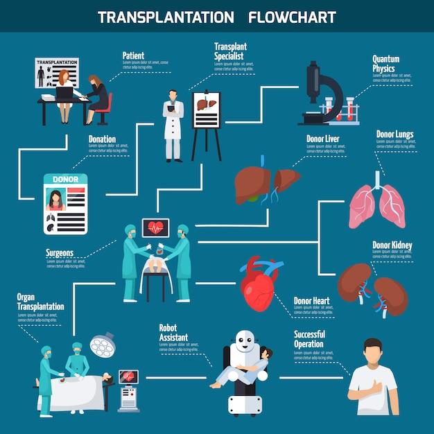Organigramme de transplantation Vecteur gratuit