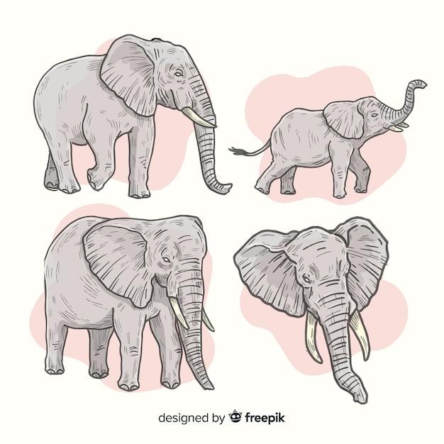 Pack D'éléphants Dessinés à La Main Vecteur gratuit