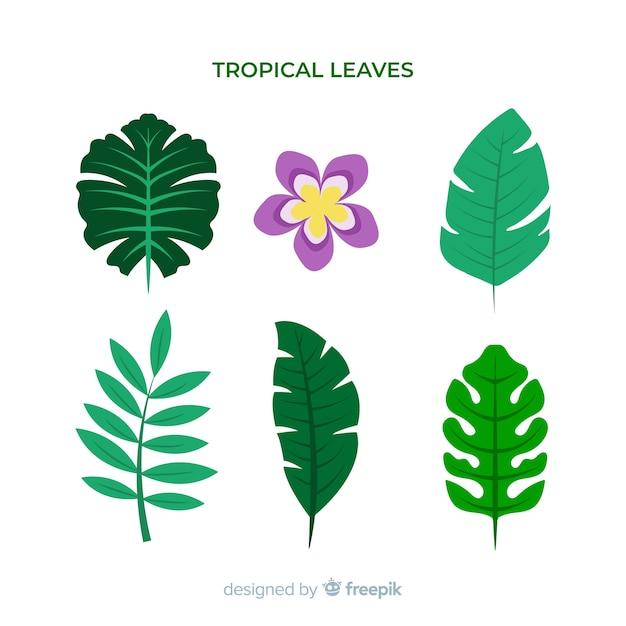 Pack de feuilles et de fleurs tropicales dessinées à la main Vecteur gratuit
