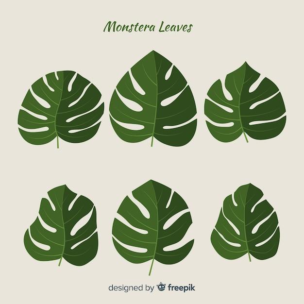Pack de feuilles de monstera dessinées à la main Vecteur gratuit
