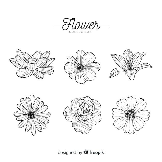 Pack de fleurs dessinées à la main Vecteur gratuit
