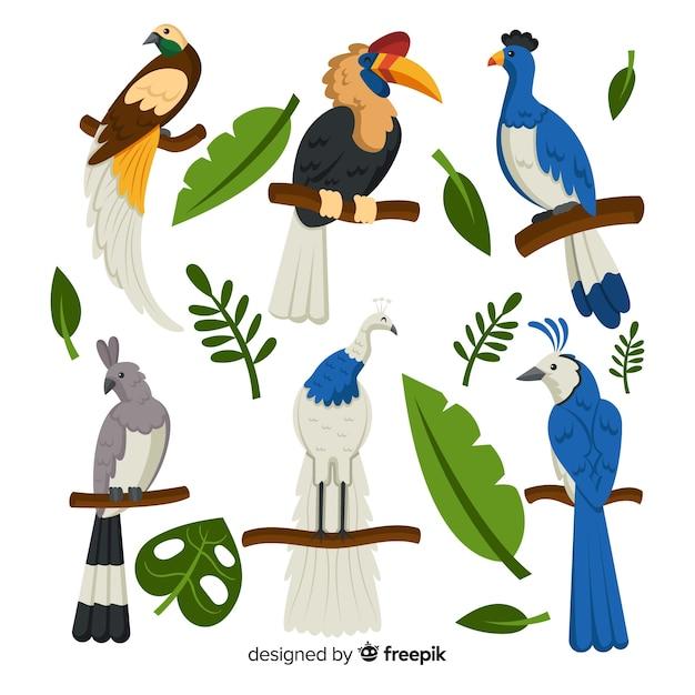 Pack d'oiseaux exotiques plats Vecteur gratuit