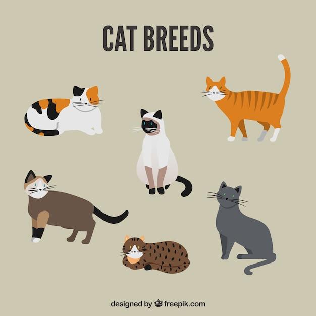 Pack de race de chat mignon Vecteur gratuit