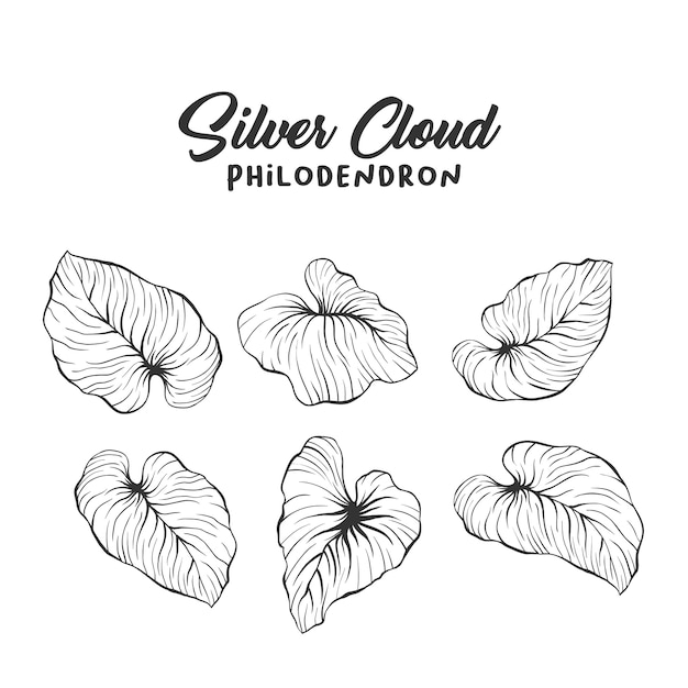 Palm leaves dessin réaliste Vecteur gratuit
