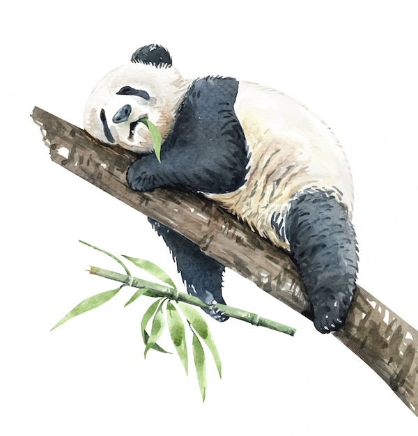 Panda aquarelle mangeant du bambou sur une branche Vecteur Premium
