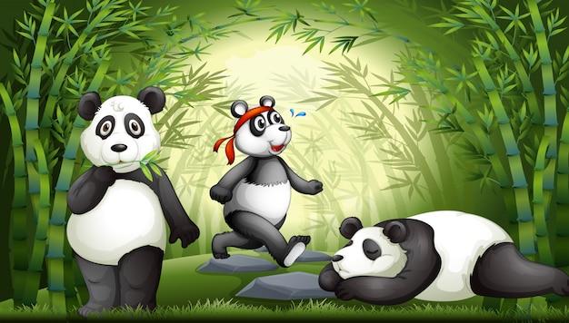 Panda dans la forêt de bambous Vecteur gratuit