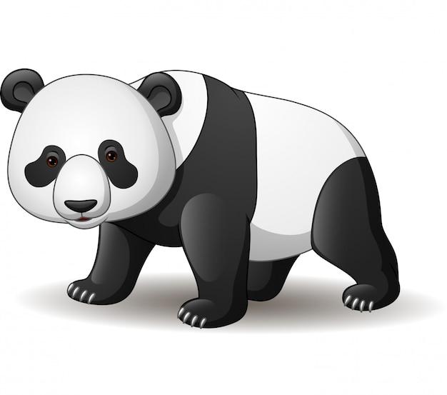 Panda de dessin animé isolé sur fond blanc Vecteur Premium