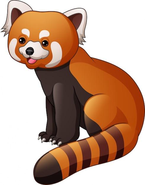 Panda rouge de dessin animé isolé sur fond blanc Vecteur Premium