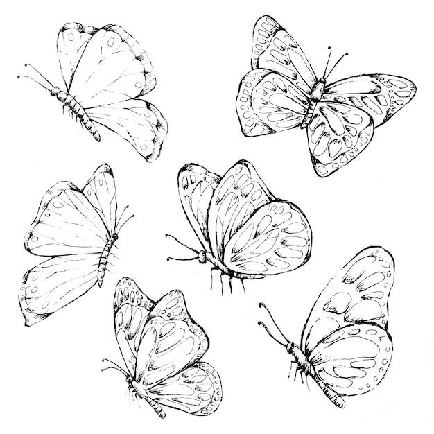 Papillon dessiné dans un style vintage Vecteur Premium