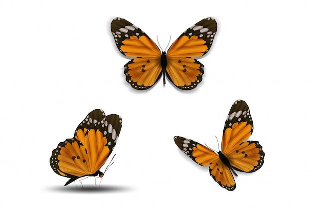Papillon divers sur fond blanc Vecteur Premium
