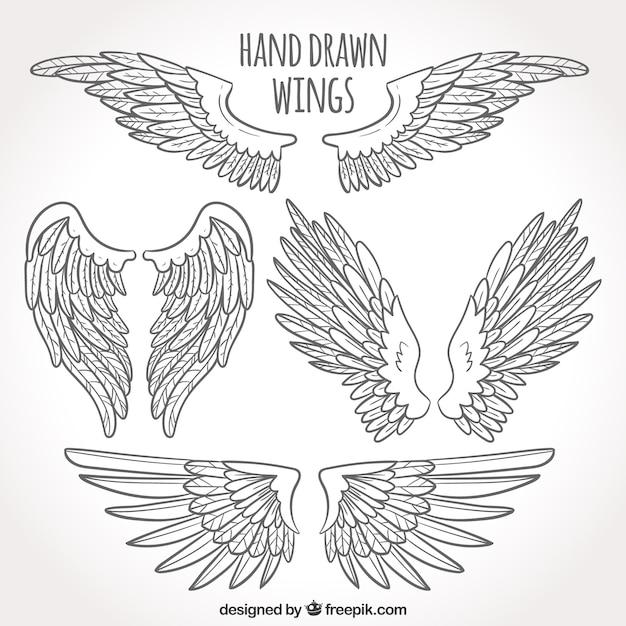Paquet D'ailes Dessinées à La Main Vecteur gratuit