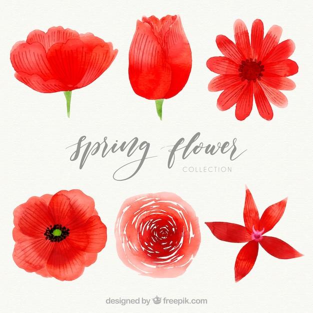 Paquet de fleurs printanières aquarelle Vecteur gratuit