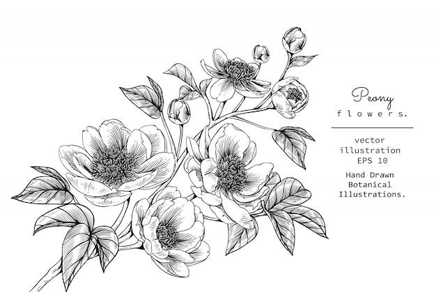 Peony pivoine et dessins de fleurs Vecteur Premium